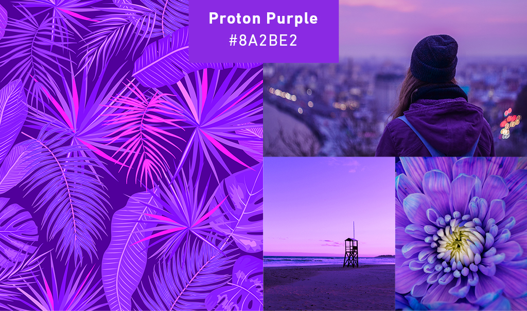 purple-collage.jpg